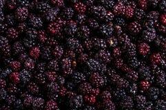 Frozen domestic wild blackberries background - texture Royalty Free Stock Photos