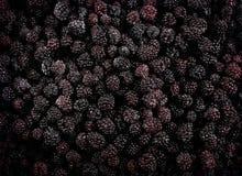 Frozen domestic wild blackberries background - texture Stock Photo