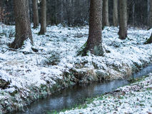 Frozen Drainage Trench. In a Forest Royalty Free Stock Photography
