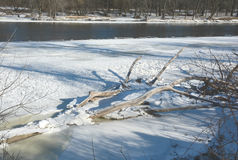 Frozen Driftwood Along The Upper Mississippi River. Rustic winter landscape of driftwood locked up in ice and snow, along the Upper Mississippi River in central royalty free stock images
