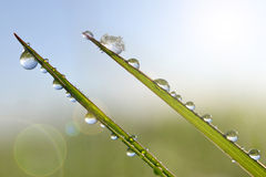 Frozen drops of dew on a blades of green grass. Stock Photos