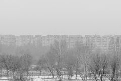 Frozen dry trees in winter and city panoramic buildings. Black a Stock Photography
