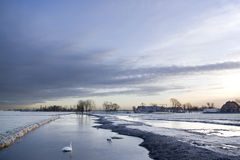 Frozen dutch canal. Dutch agricultural winter scene with a swan on the frozen canal stock photo