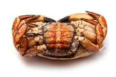Frozen edible brown crab Stock Image
