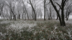 Frozen enchanted forest. A beautiful frozen forest in winter Royalty Free Stock Photos