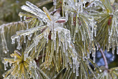 Frozen Evergreen Ends Royalty Free Stock Photos