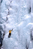 On the frozen face of it. Ice climber solo on huge ice wall in Ouray Colorado Stock Photography