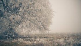 Frozen fall meadow tree Stock Photo