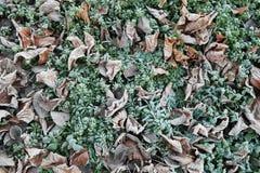 Frozen fallen leaves on grass Royalty Free Stock Photo