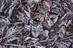 Frozen fallen leaves Royalty Free Stock Images