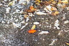 Frozen fallen leaves on surface of street close up royalty free stock photos