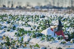 Frozen Farm Field Royalty Free Stock Image