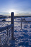 FROZEN: fence 3. FROZEN: hoared fence with counted light from the SUN Stock Image