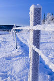 FROZEN: fence Royalty Free Stock Photos