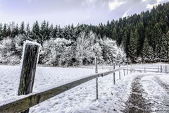 Frozen fence Royalty Free Stock Photo
