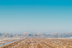 Frozen field in Kyrgyzstan. Frozen field and blue sky Royalty Free Stock Photo