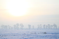 Frozen field in the morning Stock Photography
