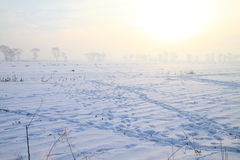 Frozen field in the morning Royalty Free Stock Image
