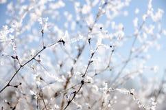 Free Frozen Field Near Ne 124 Street In Kirkland Royalty Free Stock Photo - 62985135