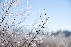 Frozen field near Ne 124 Street in Kirkland Stock Images