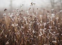 Frozen field. Frozen plants in the meadow Royalty Free Stock Photography