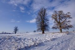 Frozen field with trees Stock Images