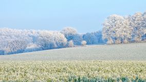 Frozen field and trees on cold clear winter. And blue sky Royalty Free Stock Image