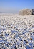 Frozen fields and meadows Stock Images