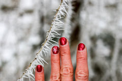 Frozen. Fingers with red nail polish next to frost on branch Royalty Free Stock Photography