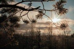Frozen fir branch Stock Photography