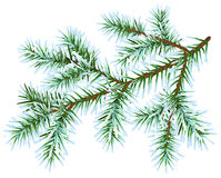 Frozen fir branch Royalty Free Stock Images