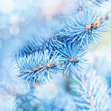 Frozen fir tree background Stock Photo