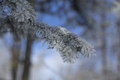 Frozen fir tree Stock Image