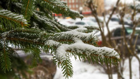 Frozen firs mid Royalty Free Stock Photography