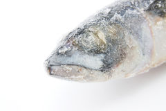 Frozen fish Stock Images