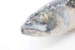 Frozen fish Stock Images