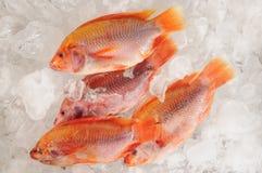 Frozen fish. Royalty Free Stock Image