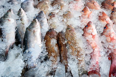 Frozen fish. Clese up of frozen fish Stock Photography
