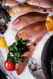 Frozen fish Stock Photography