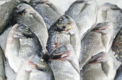 Frozen fish. Clese up of frozen fish Stock Image