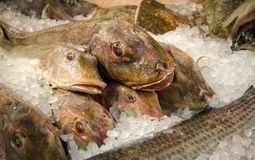 Frozen fish Royalty Free Stock Image
