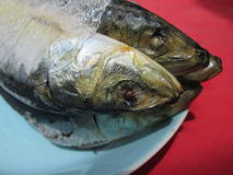 Frozen Fish. Stock Images