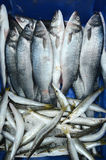 Frozen fish on display in Middle eastern fish market Royalty Free Stock Photography