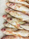 Frozen  fish, five lined threadfin bream , on the ice at fish marke Stock Photos