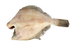 Frozen fish. Flounder Royalty Free Stock Images