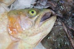 Frozen fish. Freshfish market. Gilt-head bream. Fish sale in market. Sea bream fish on ice. Fresh fish on ice for sale. Frozen ice-cold fish in the store Frozen stock photo