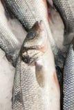 Frozen fish. Freshfish market. Gilt-head bream. Fish sale in market. Sea bream fish on ice. Fresh fish on ice for sale. Frozen ice-cold fish in the store Frozen royalty free stock images
