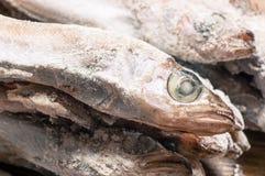 Frozen fish head closeup Stock Photos