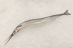 Frozen fish on ice. 1 frozen fish on ice Stock Image