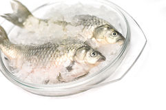 Frozen fish in ice Stock Images